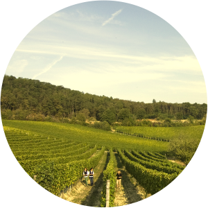 vineyards1-circle
